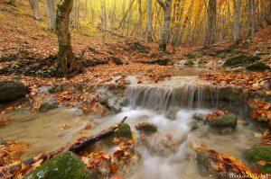 Hocking Hills Fall Foliage